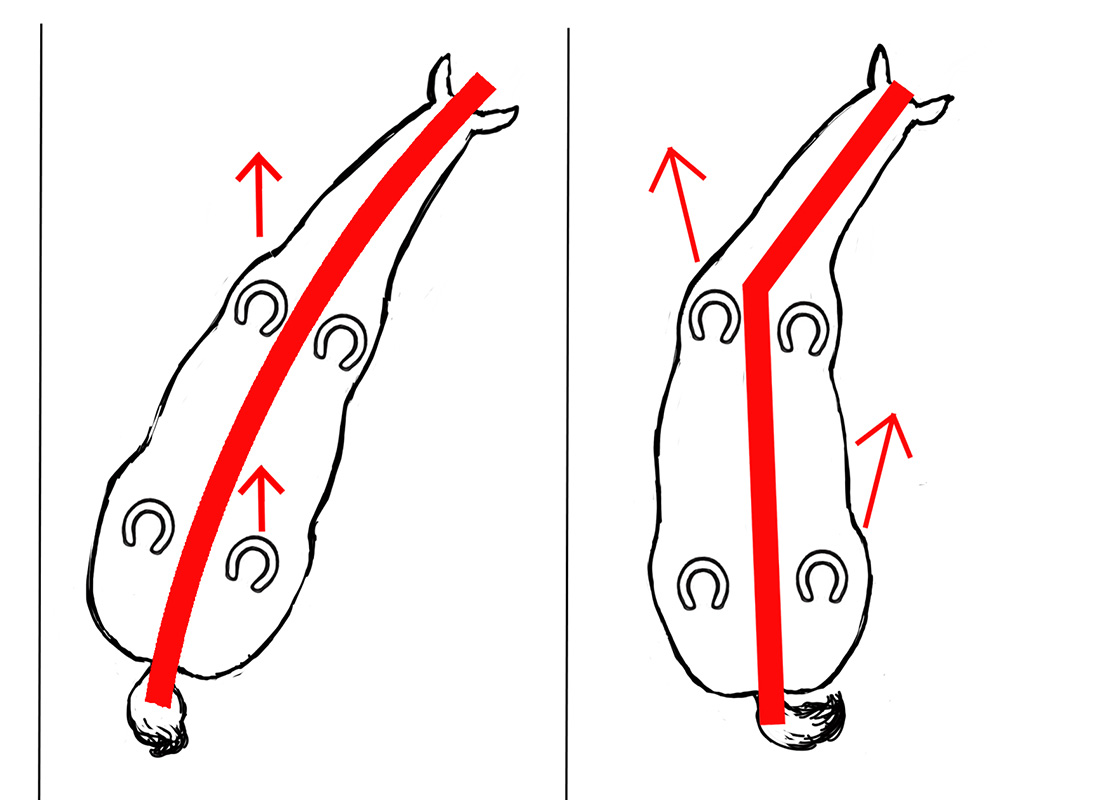 ABC der Pferdeausbildung: Schulterherein richtig und falsch schematisch