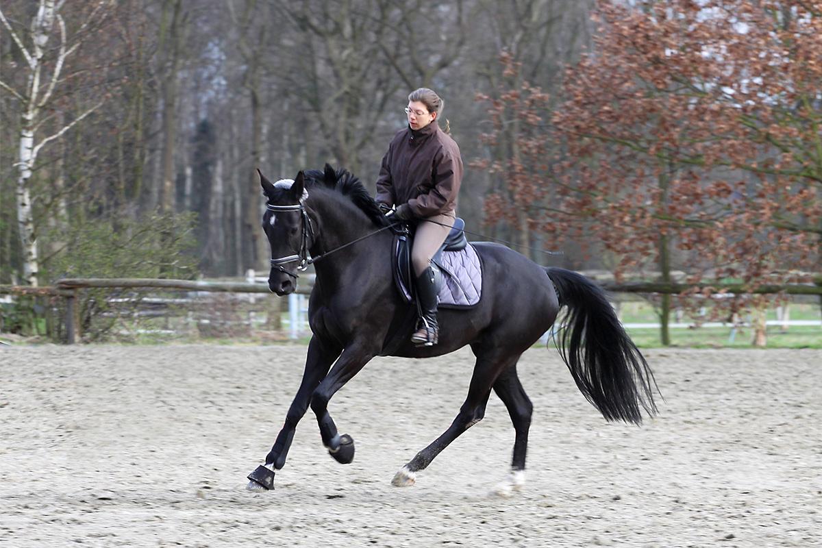 Verbesserung der Galoppade durch pferdegerchten Beritt