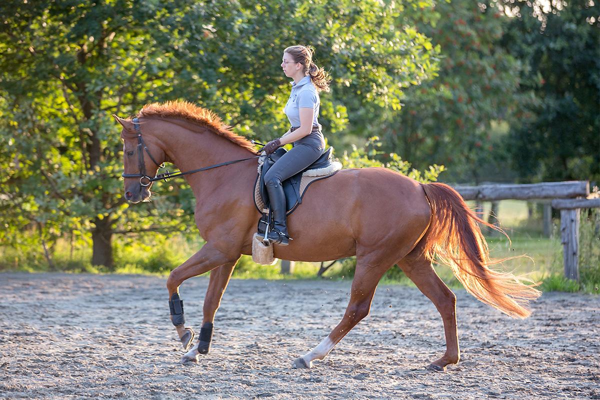 Pferdegerechte Ausbildung,Arbeitsgalopp über den Rücken in die Hand