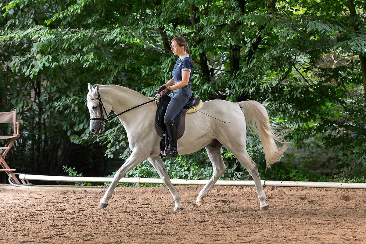 pferdegerechte Ausbildung für alle Rassen,Araber im Arbeitstrab