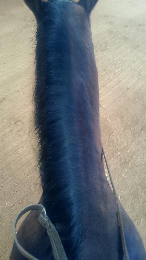 ABC der Pferdeausbildung: schwache Halsmuskulatur