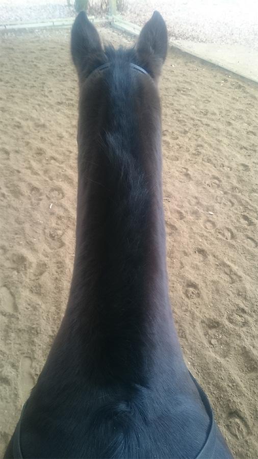 ABC der Pferdeausbildung: gut ausgeprägte Halsmuskulatur