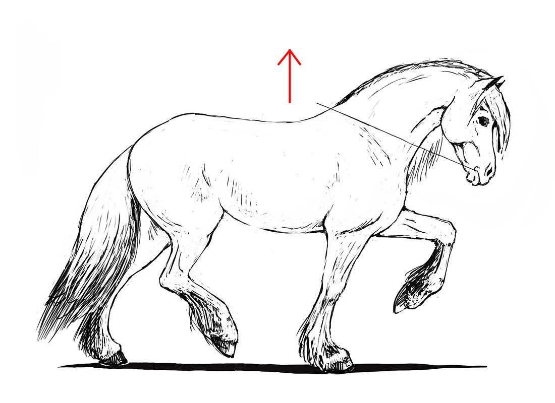 ABC der Pferdeausbildung: relative Aufrichtung beim Friesen