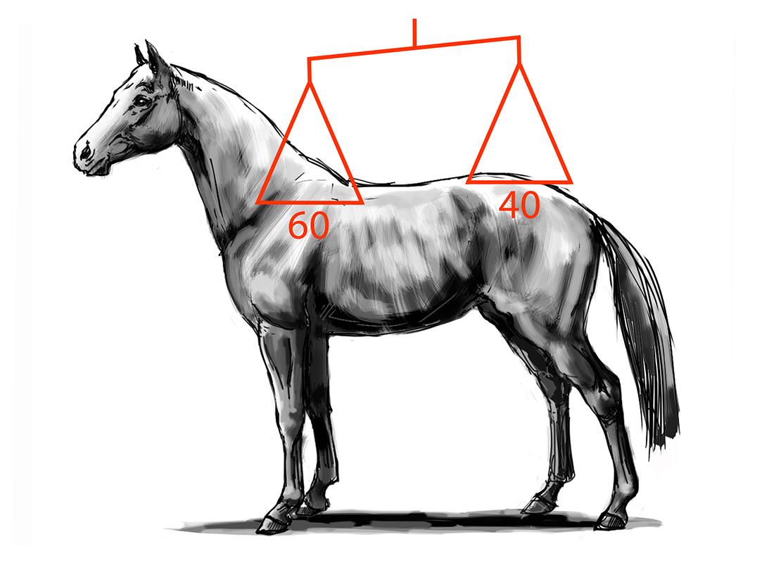 ABC der Pferdeausbildung: natürliches Gleichgewicht des Pferdes
