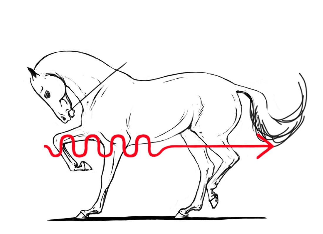 ABC der Pferdeausbildung: Die Rollkur ist grundsätzlich abzulehnen
