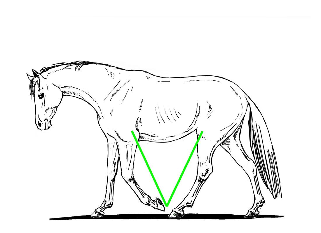 ABC der Pferdeausbildung: V-Bildung im Schritt