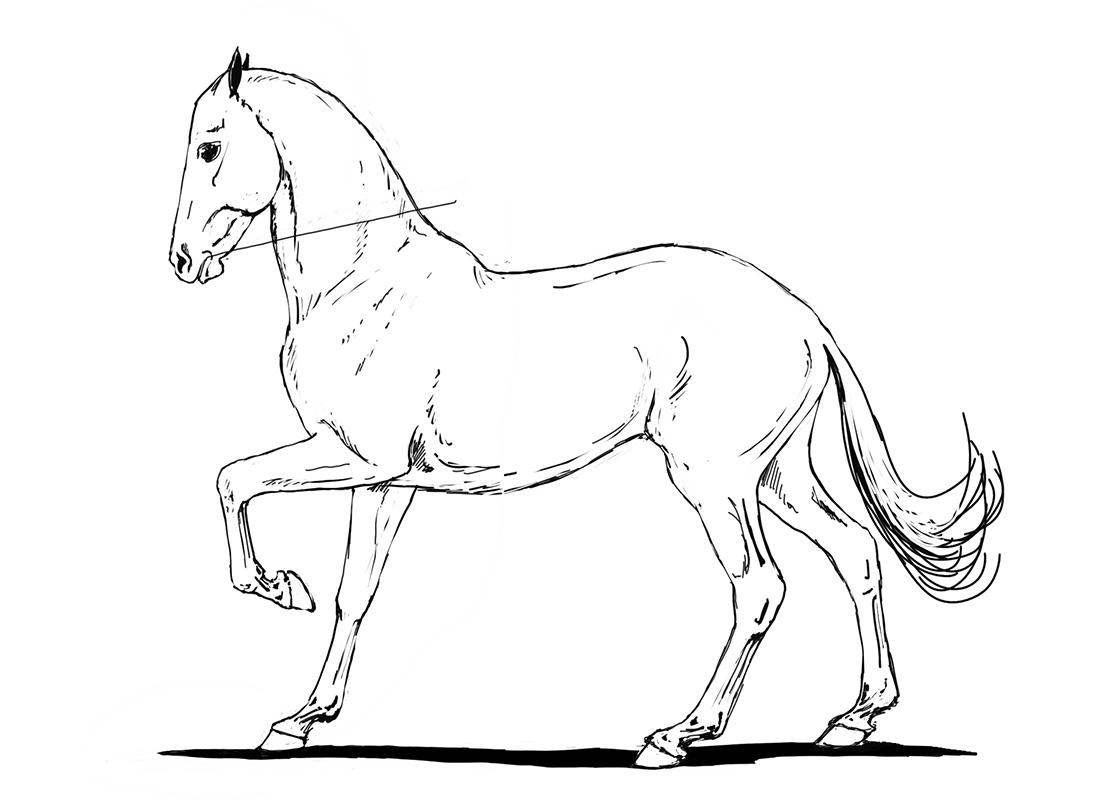 ABC der Pferdeausbildung: absolute Aufrichtung