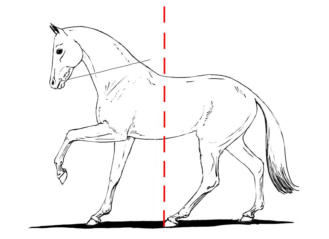ABC der Pferdeausbildung: relative Aufrichtung