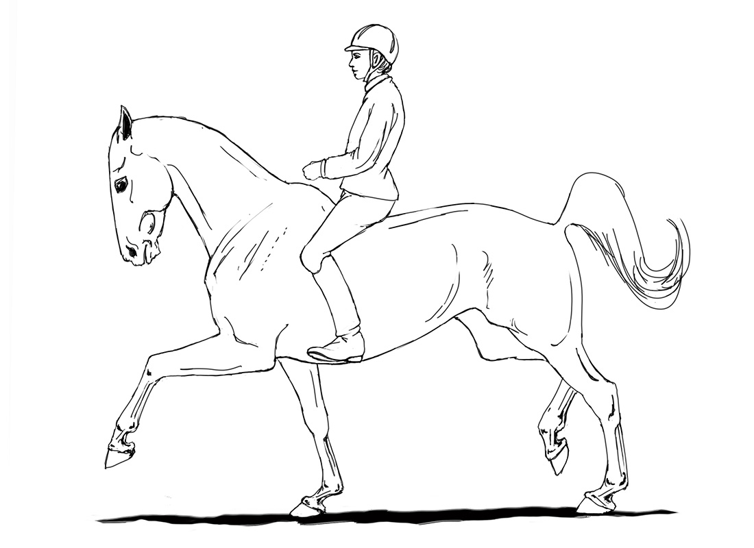 ABC der Pferdeausbildung: enger Hals und weggedrückter Rücken in der Verstärkung