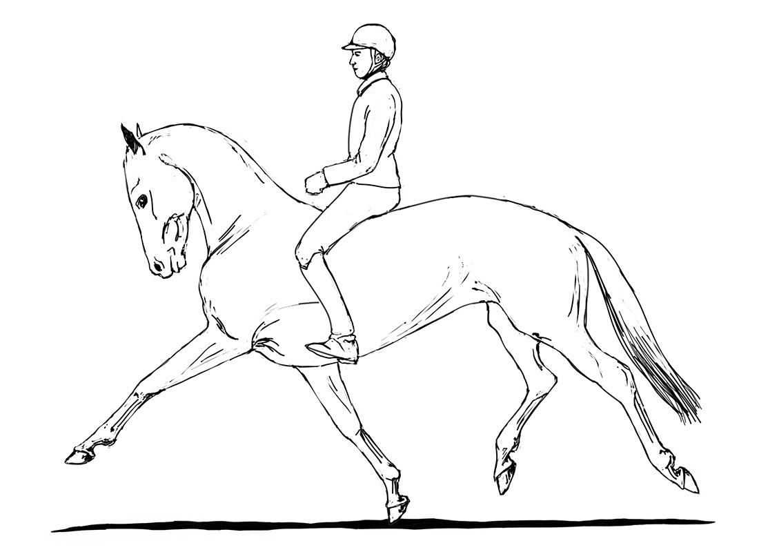 ABC der Pferdeausbildung: Taktverlust in der Verstärkung durch harte Hand