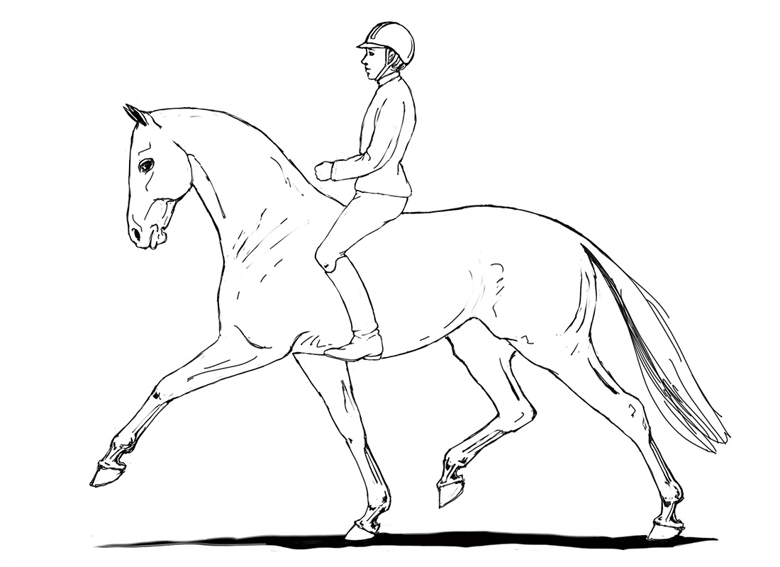 ABC der Pferdeausbildung: Trabverstärkung über den Rücken geritten