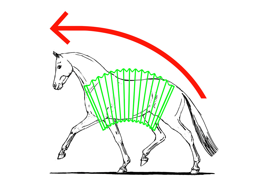 ABC der Pferdeausbildung: Aufrichtung durch aktive Hinterhand