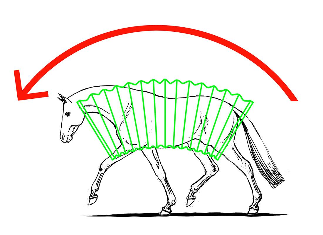 ABC der Pferdeausbildung: Dehnungshaltung mit aktiver Hinterhand