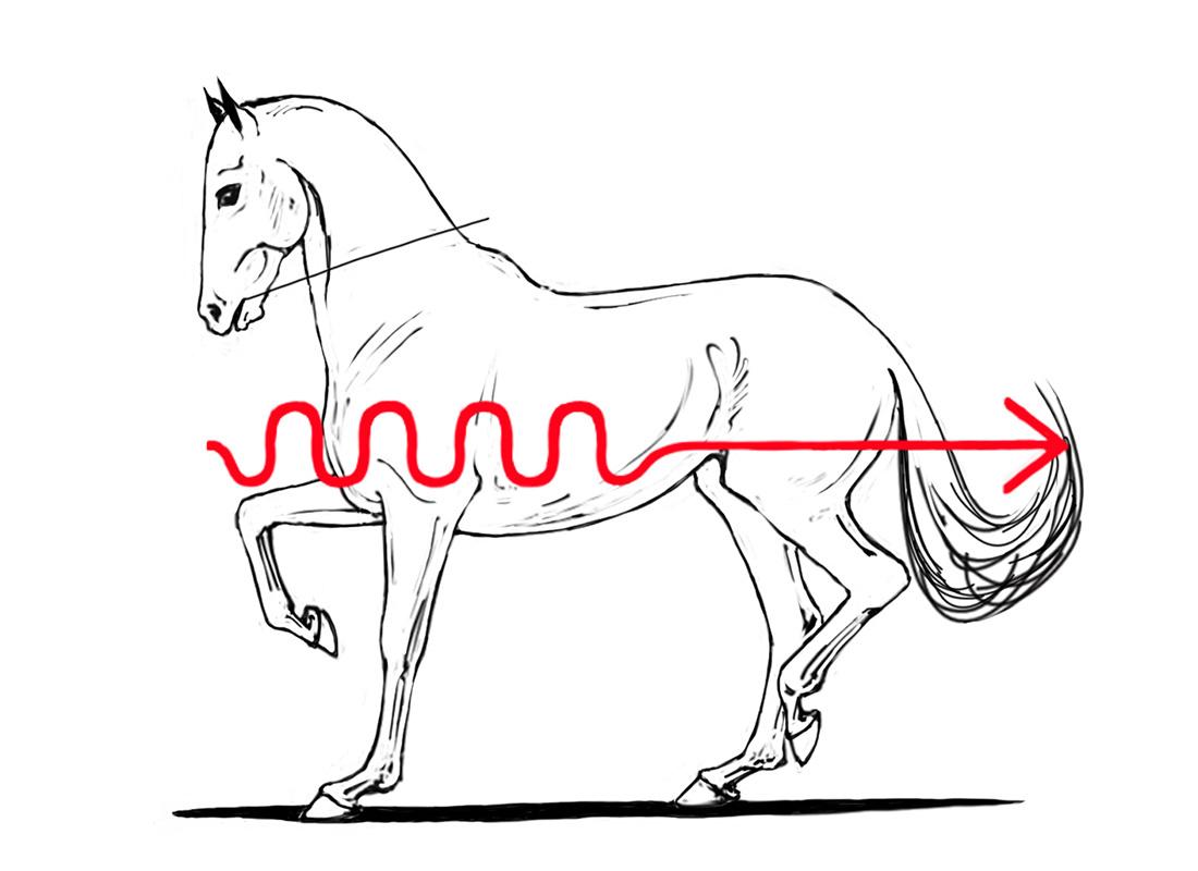 ABC der Pferdeausbildung: absolute Aufrichtung durch fehlendes Vorwärtsreiten