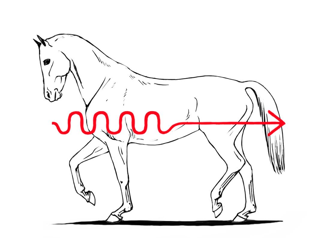 ABC der Pferdeausbildung: absolute Aufrichtung durch inaktive Hinterhand