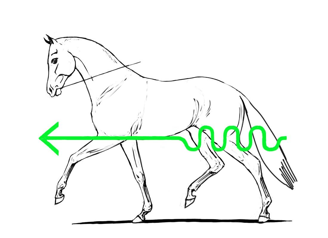 ABC der Pferdeausbildung: korrekte Anlehnung im Trab